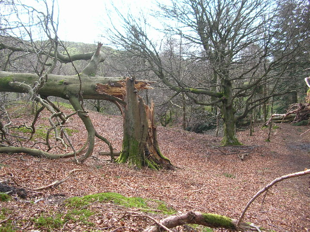 Wood above Colwith