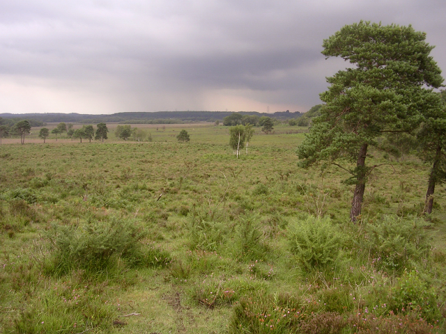 Beaulieu Heath East towards Dibden Bottom, New Forest