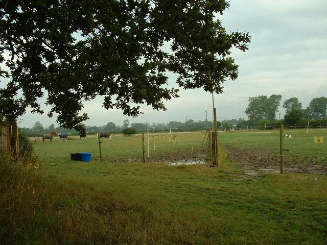 Paddocks near Walberton