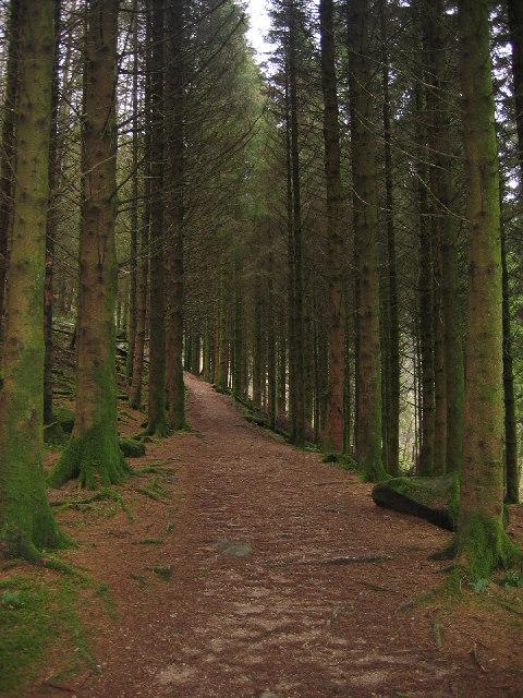 Path through Glenashdale Wood