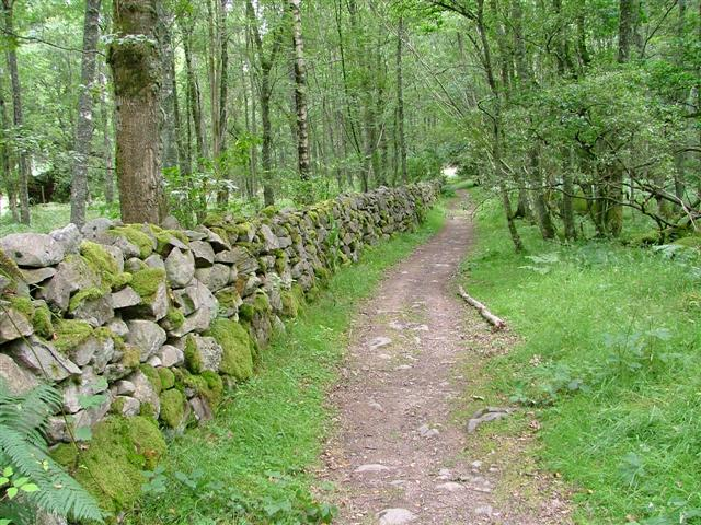 Path Alongside Wall, Scolty Forest