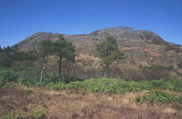 Woods, Morar