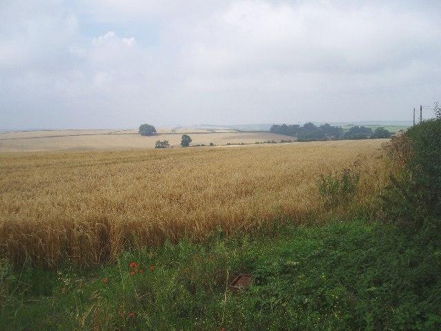Looking west over farmland