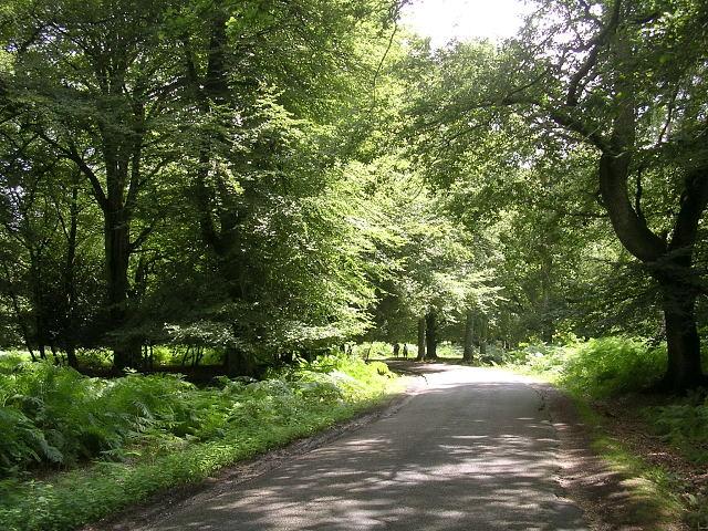 Bolderwood Arboretum Ornamental Drive, New Forest