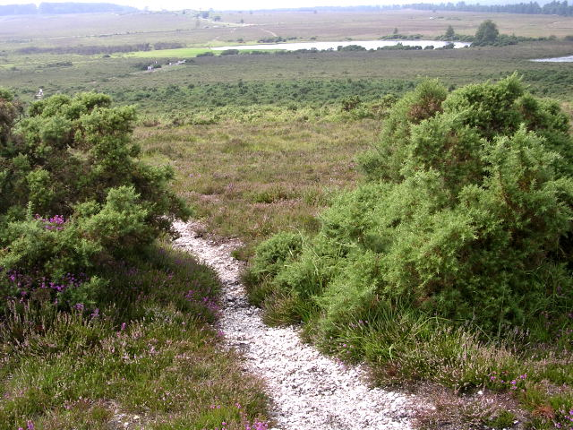 Whitten Bottom from Holmsley Ridge, New Forest