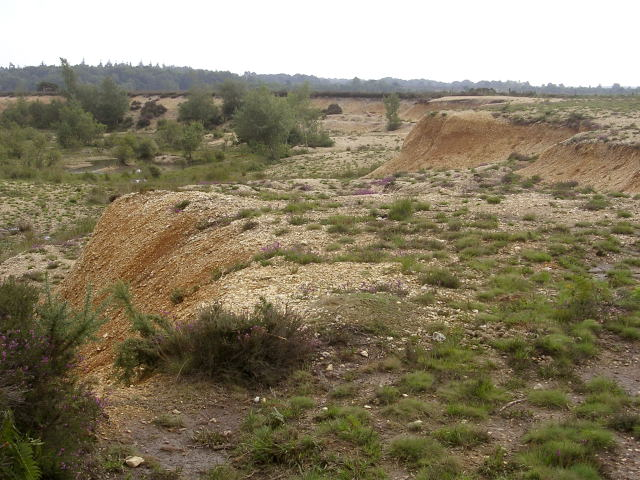 Edge of Holmsley Ridge gravel pit, New Forest
