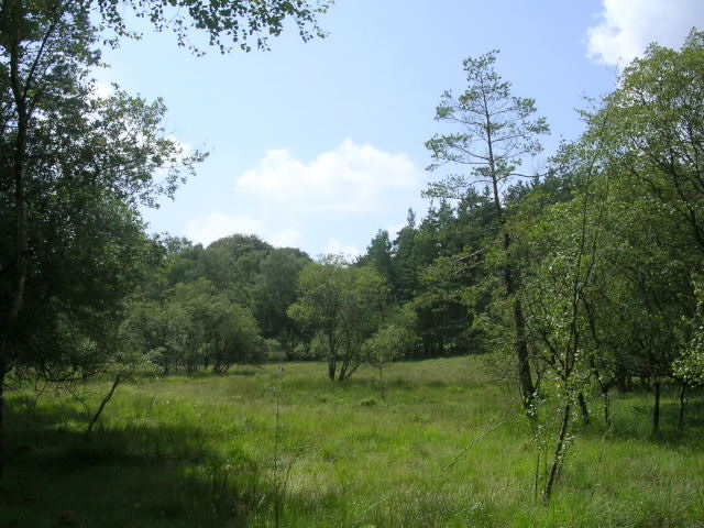 Boggy woodland at Vinney Ridge, New Forest