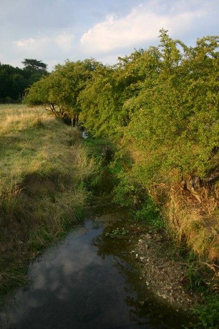 River Linnet in Ickworth Park