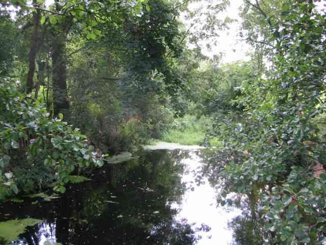 River Colne at Colney Heath