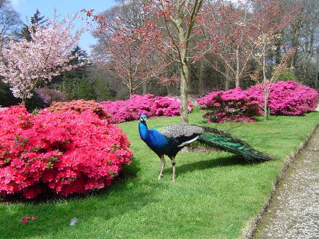 Gardens at Trevarno