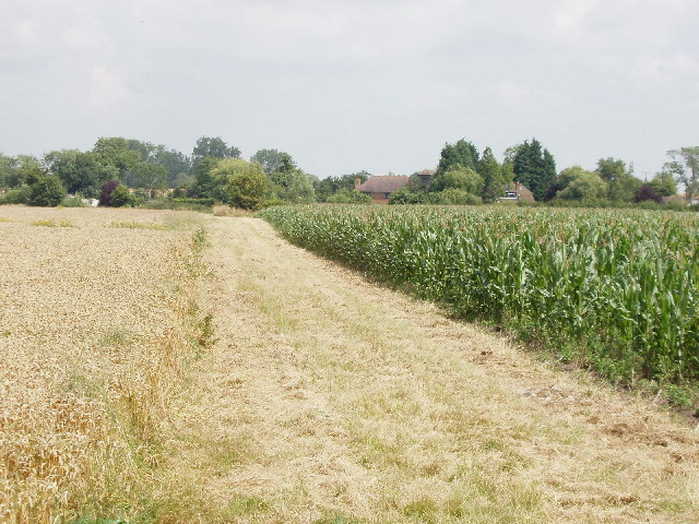Maize and wheat fields near Forty Green