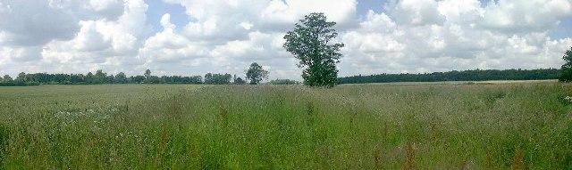 Farmland, Necton