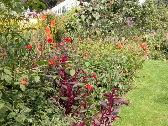 Herbaceous Border and Greenhouses, Peckover House