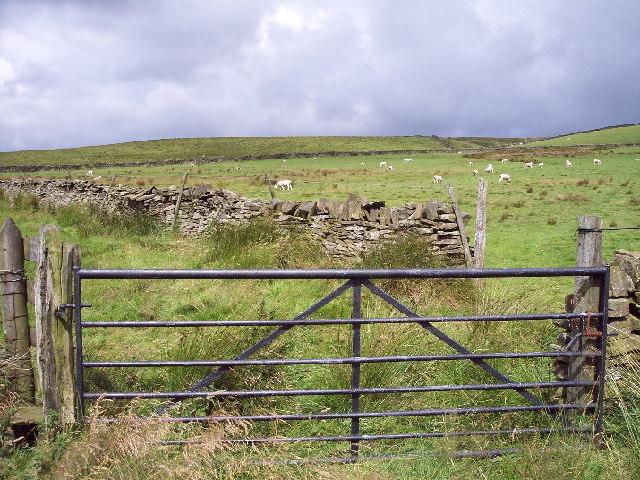 Sheep grazing, Thurrish