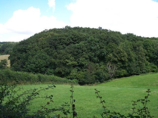 Mallins Wood