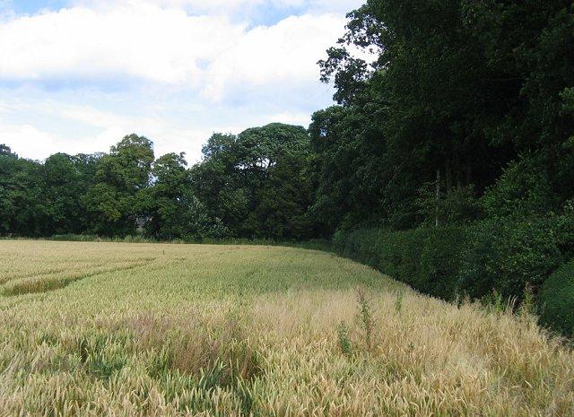 Wheatfield, Carlowrie