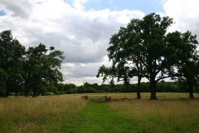 Lownde Wood, Ickworth