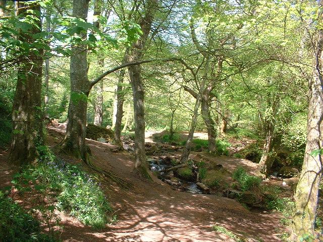 Trevaylor Woods, nr Penzance, Cornwall