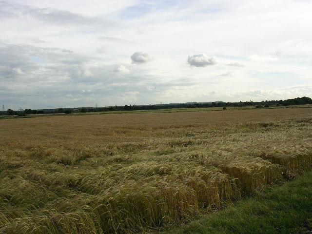 Farmland on Rixton Moss