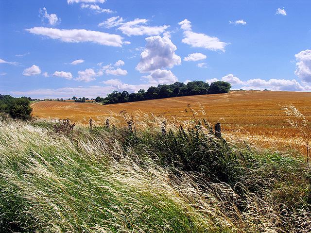 Farmland near Beedon