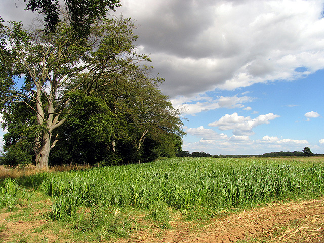 Cornfield near Stanmore