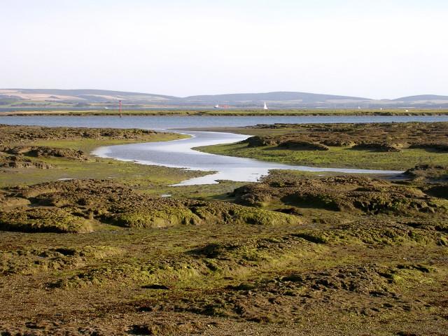 Tidal mudflats near Inchmery House, Lower Exbury
