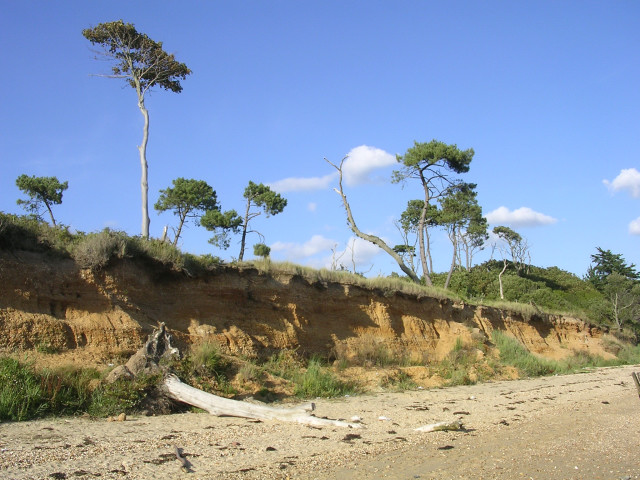 Crumbling cliff and toppling trees, west of Lepe House