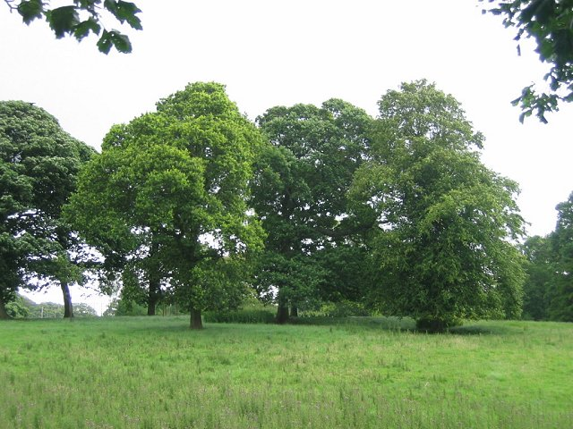 Parkland, Kirknewton