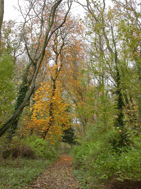 Cobbs Wood