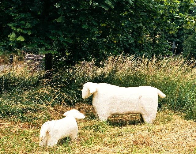 Worston sheep