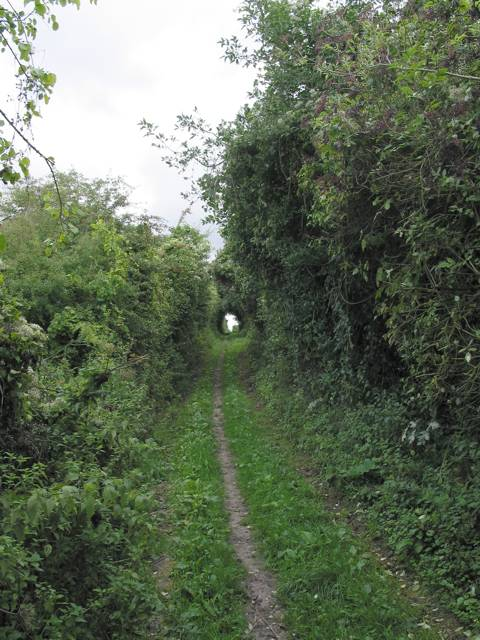 Looking E and uphill along Ox Drove bridleway