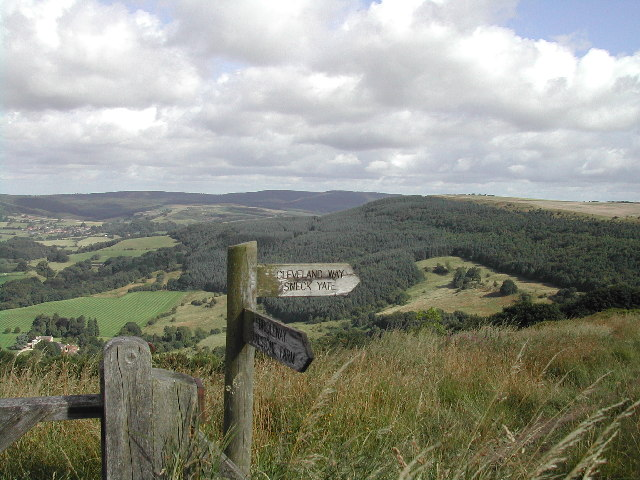 South Woods, Hambleton Hills on the Cleveland Way