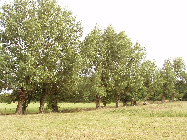 Trees by B4444, Princes Risborough