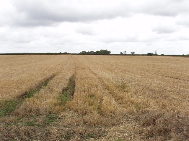 Cornfield near Ilmer
