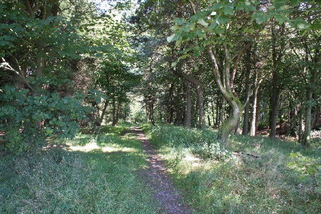 Woodland trail, Ogden Plantation