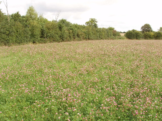 Field of clover, between Ilmer and Owlswick