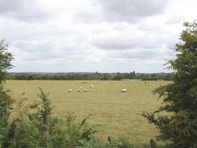 Sheep pasture near Haddenham