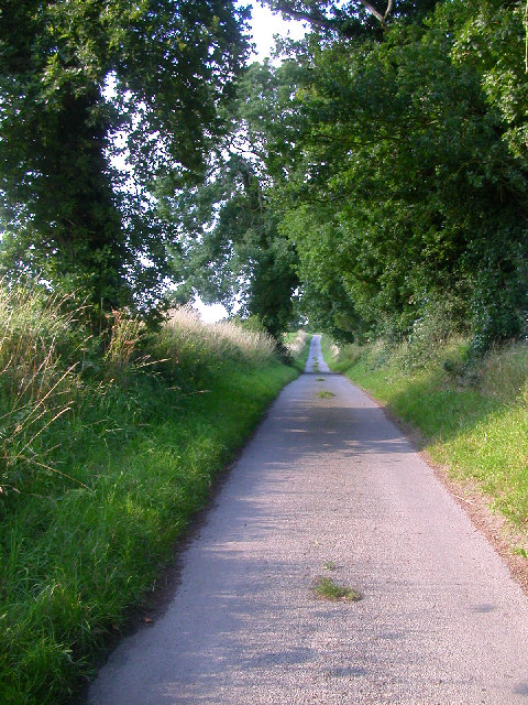 Lane between Cantley and Hassingham