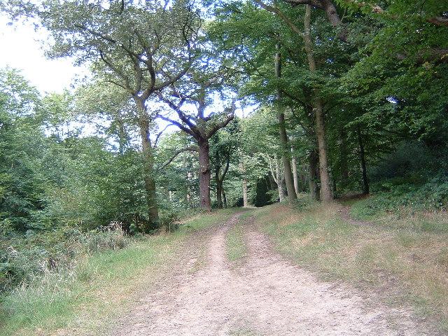 Hawk Wood