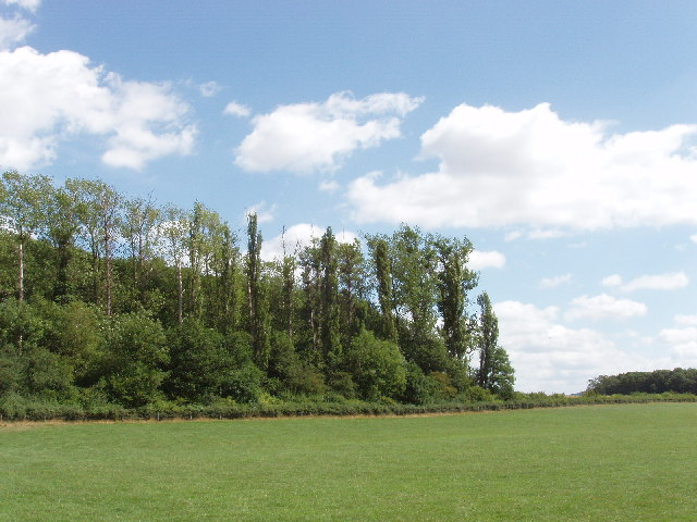 Patch of woodland by pasture, near Towersey