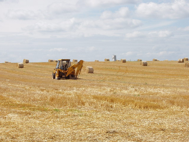 Harvest in progress in cornfield near Towersey