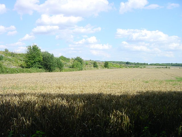 Railway embankment south east of Lenham