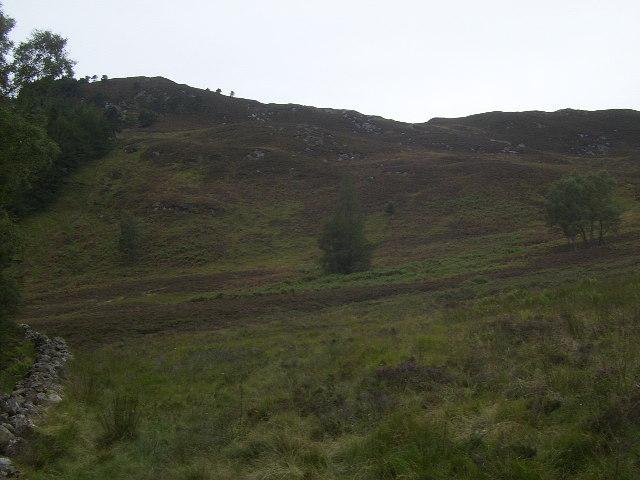 Treeline on the path to Ben Vrackie