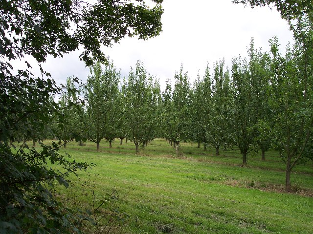 Apple Orchard, Upper Townend Farm