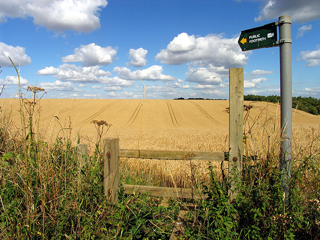 Footpath Across Barley Fields Near Beedon