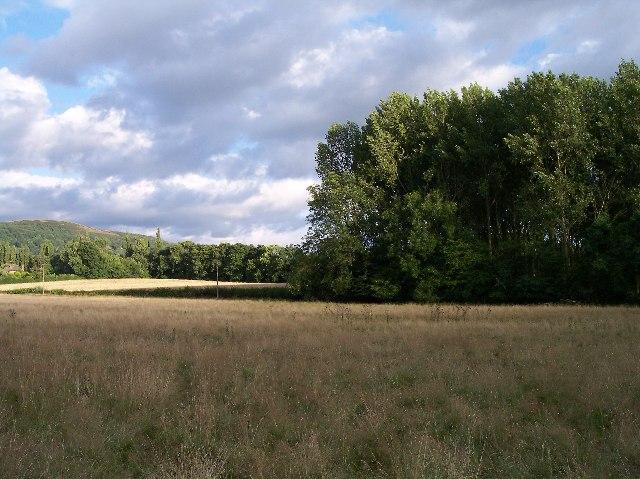 Un-named copse and rough grassland