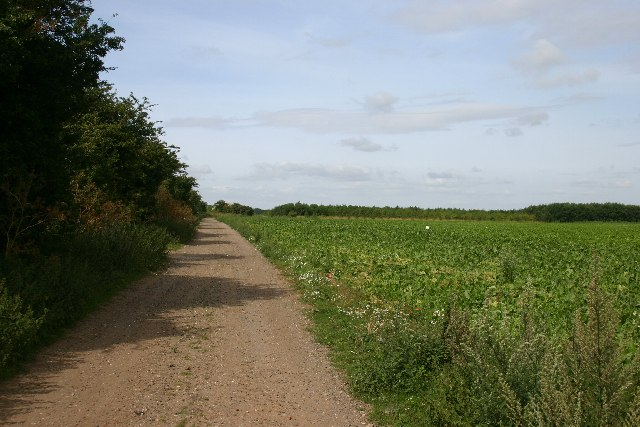 Track leading to Twenty Acre Hill