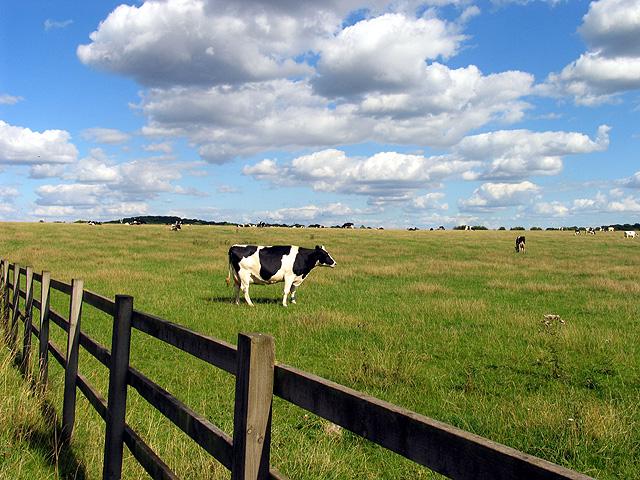 Down Farm Land near Worlds End