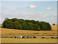 SU1241 : Farmland and Copse South East of Stonehenge by Pam Brophy
