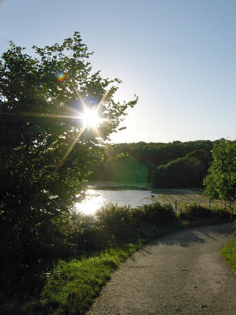 Evening sunshine, Rutland Water